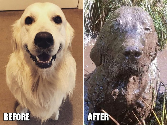 10+ Canines Who Loved Their Mud Play Time A Little Too A lot