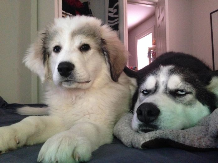20+ Canine Who Received A Youthful Sibling And It Ruined Their Life