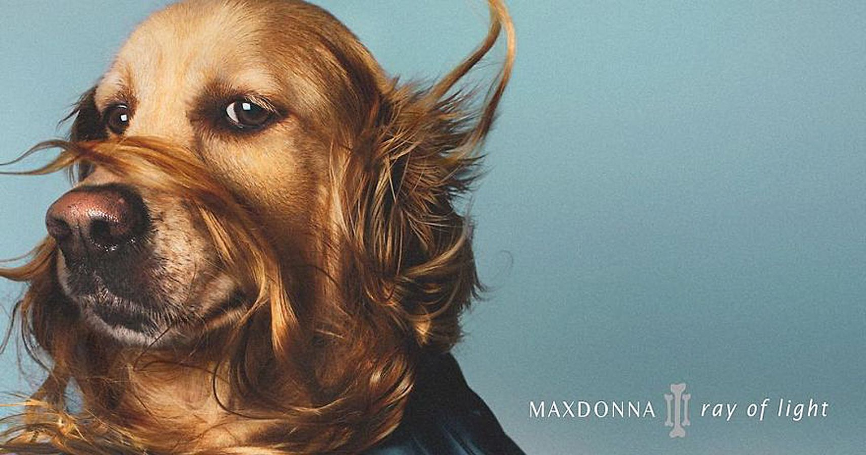 Madonna's Iconic Pictures Recreated - By A Canine