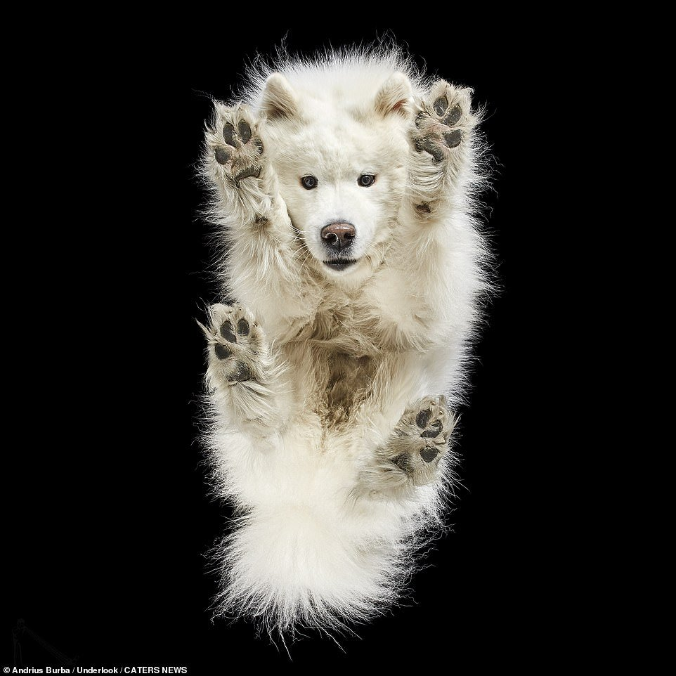 Photographer Takes Photos Of Canine From Beneath And They Are Too Cute